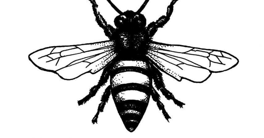 plan-bee-logo-square